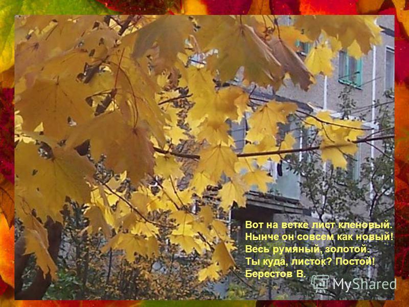 Как на выставке картин: Залы, залы, залы Вязов, ясеней, осин В позолоте небывалой. Б.Пастернак.