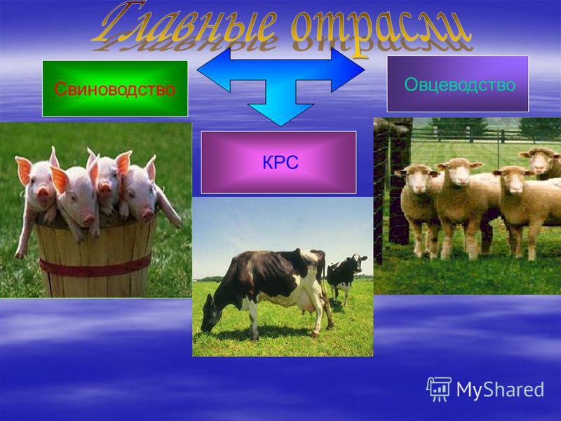 Свиноводство Овцеводство КРС