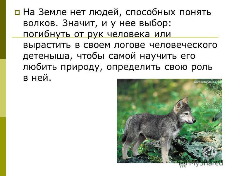 На Земле нет людей, способных понять волков. Значит, и у нее выбор: погибнуть от рук человека или вырастить в своем логове человеческого детеныша, чтобы самой научить его любить природу, определить свою роль в ней.