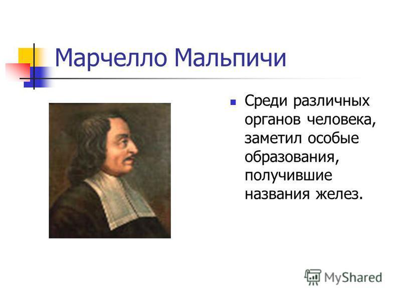 Марчелло Мальпичи Среди различных органов человека, заметил особые образования, получившие названия желез.
