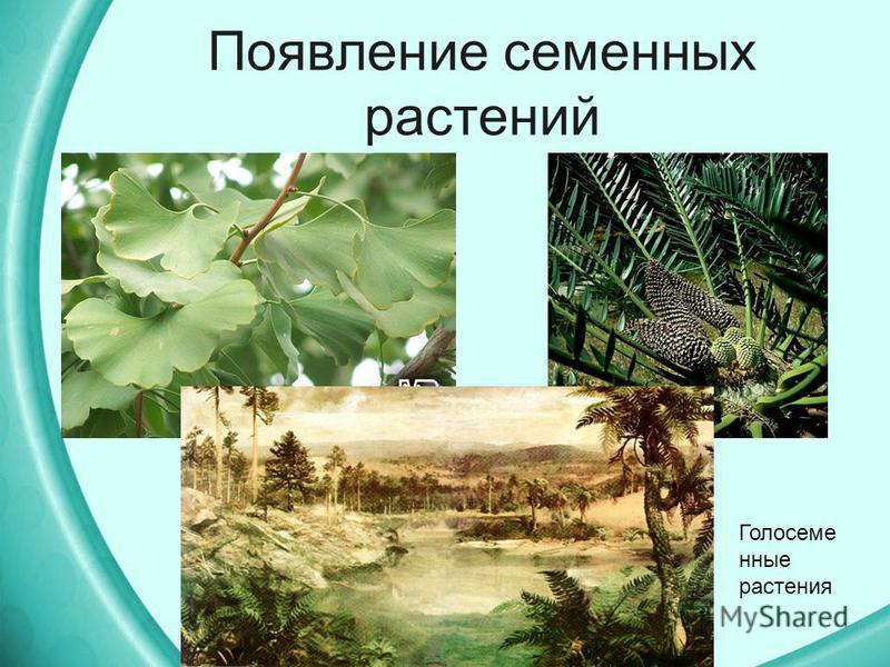 Появление семенных растений Голосеме нные растения