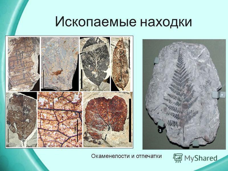 Ископаемые находки Окаменелости и отпечатки