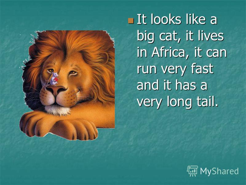 It looks like a big cat, it lives in Africa, it can run very fast and it has a very long tail. It looks like a big cat, it lives in Africa, it can run very fast and it has a very long tail.