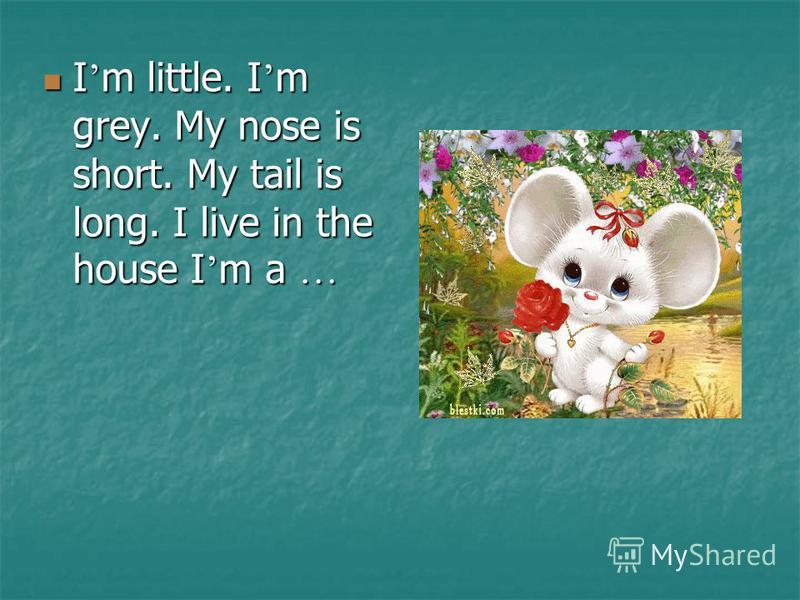 I m little. I m grey. My nose is short. My tail is long. I live in the house I m a … I m little. I m grey. My nose is short. My tail is long. I live in the house I m a …