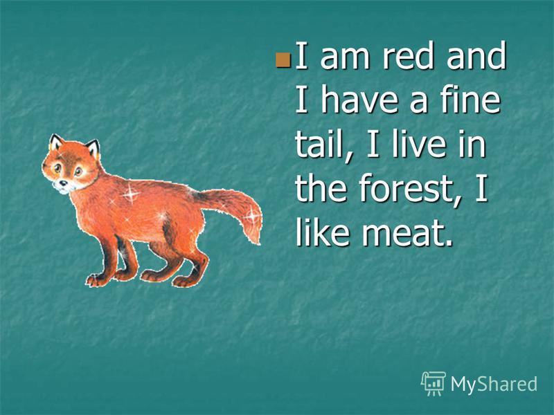 I am red and I have a fine tail, I live in the forest, I like meat. I am red and I have a fine tail, I live in the forest, I like meat.