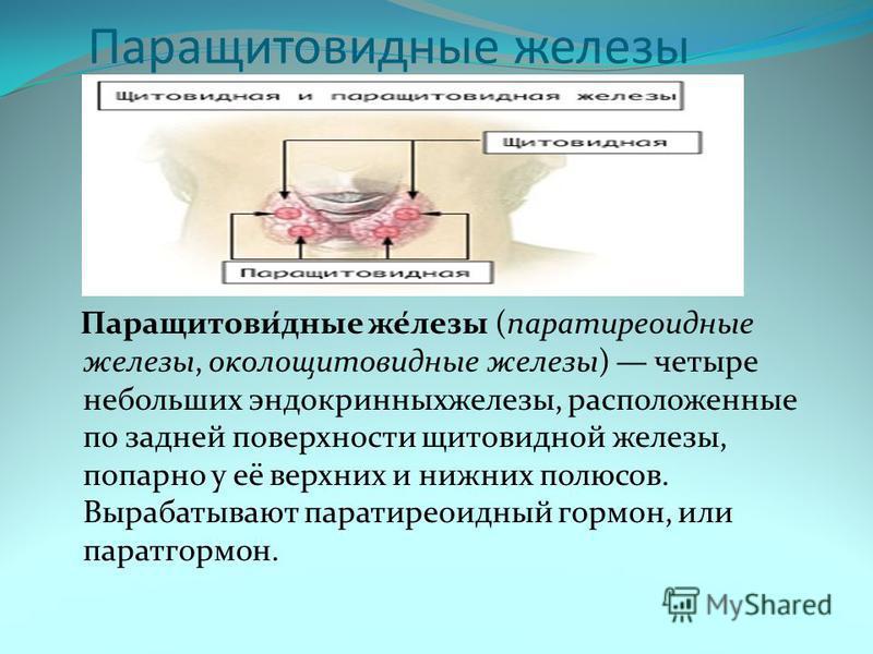 Паращитовиданные железы Паращитови́данные же́лезы (паратиреоиданные железы, околощитовиданные железы) четыре небольших эндокринных железы, расположенные по задней поверхности щитовидной железы, попарно у её верхних и нижних полюсов. Вырабатывают пара