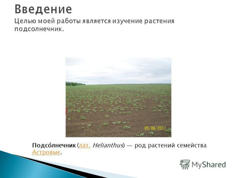 Подсо́лнечник (лат. Helianthus) род растений семейства Астровые.лат. Астровые