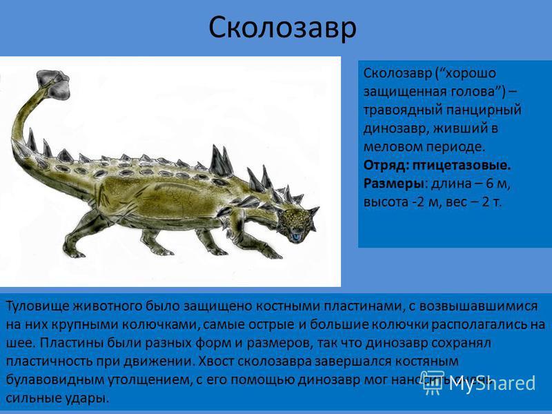 Спинозавр Период существования: меловой период - около 100 - 93 млн. л.н. Отряд: Ящеротазовые Размеры: длина 16-18 м высота 7-8 м вес 7-9 т. Питание: Рыба Обнаружен: 1915 год, Египет Спинозавр - динозавр мелового периода. Спинозавр - представитель ящ