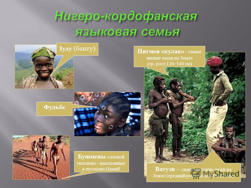 Зулу (банту) Пигмеи «кулак» - самые низкие люди на Земле (ср. рост 120- 140 см) Ватузи – самые высокие люди на Земле (средний рост около 180-200 см) Бушмены «лесной человек» - выселенные в пустыню Намиб Фульбе