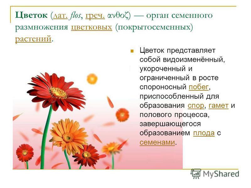 Цветок (лат. flos, греч. ανθοζ) орган семенного размножения цветковых (покрытосеменных) растений.лат.греч.цветковых растений Цветок представляет собой видоизменённый, укороченный и ограниченный в росте спороносный побег, приспособленный для образован