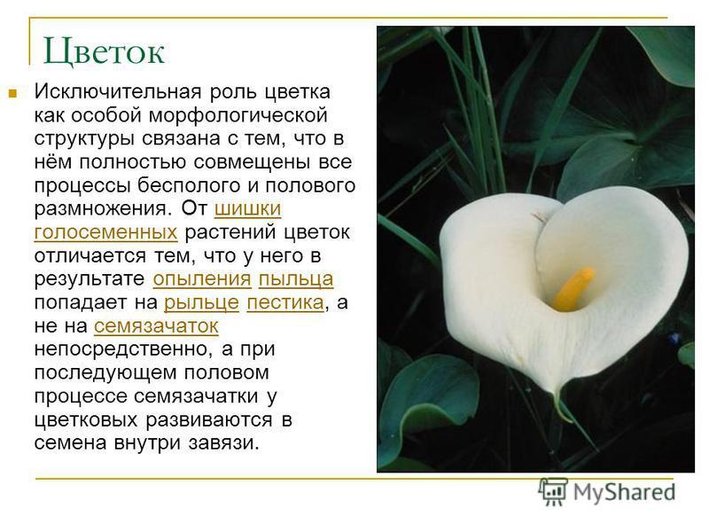Цветок Исключительная роль цветка как особой морфологической структуры связана с тем, что в нём полностью совмещены все процессы бесполого и полового размножения. От шишки голосеменных растений цветок отличается тем, что у него в результате опыления
