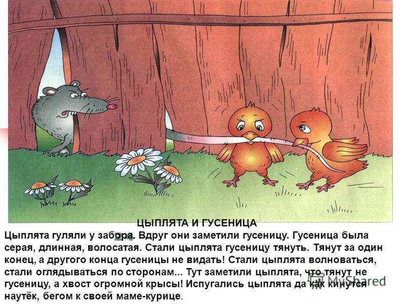 ЦЫПЛЯТА И ГУСЕНИЦА Цыплята гуляли у забора. Вдруг они заметили гусеницу. Гусеница была серая, длинная, волосатая. Стали цыплята гусеницу тянуть. Тянут за один конец, а другого конца гусеницы не видать! Стали цыплята волноваться, стали оглядываться п