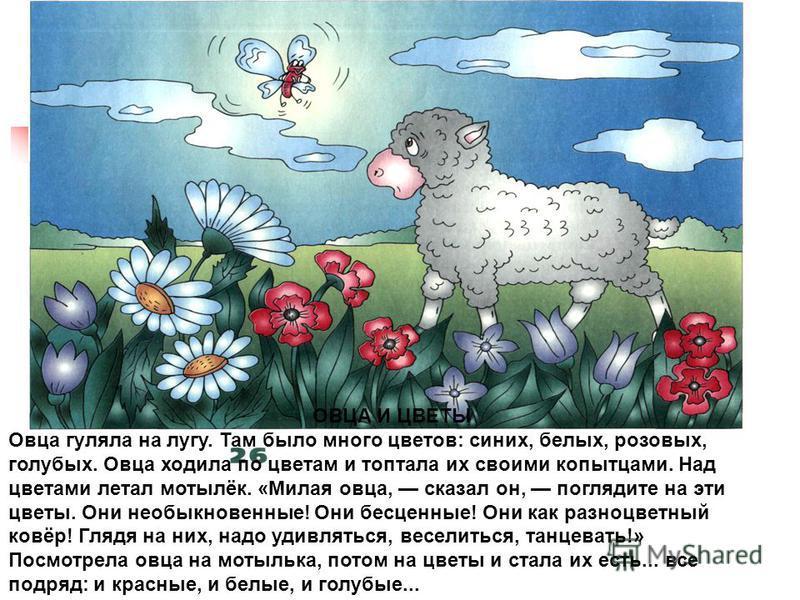 ОВЦА И ЦВЕТЫ Овца гуляла на лугу. Там было много цветов: синих, белых, розовых, голубых. Овца ходила по цветам и топтала их своими копытцами. Над цветами летал мотылёк. «Милая овца, сказал он, поглядите на эти цветы. Они необыкновенные! Они бесценные