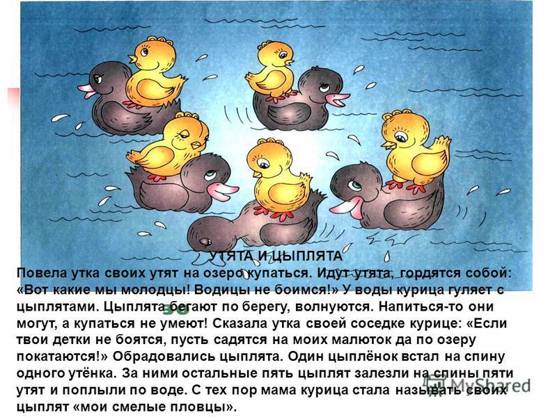 УТЯТА И ЦЫПЛЯТА Повела утка своих утят на озеро купаться. Идут утята, гордятся собой: «Вот какие мы молодцы! Водицы не боимся!» У воды курица гуляет с цыплятами. Цыплята бегают по берегу, волнуются. Напиться-то они могут, а купаться не умеют! Сказала