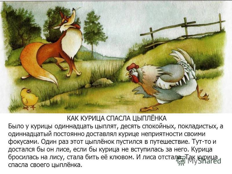 КАК КУРИЦА СПАСЛА ЦЫПЛЁНКА Было у курицы одиннадцать цыплят, десять спокойных, покладистых, а одиннадцатый постоянно доставлял курице неприятности своими фокусами. Один раз этот цыплёнок пустился в путешествие. Тут-то и достался бы он лисе, если бы к