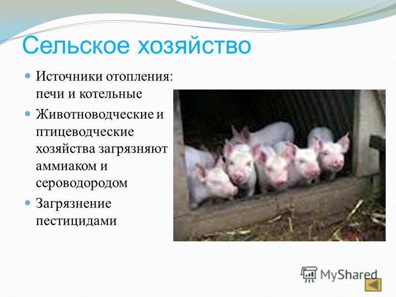 Сельское хозяйство Источники отопления: печи и котельные Животноводческие и птицеводческие хозяйства загрязняют аммиаком и сероводородом Загрязнение пестицидами