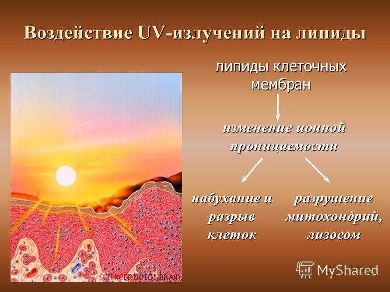 Воздействие UV-излучений на липиды изменение ионной проницаемости набухание и разрыв клеток разрушение митохондрий, лизосом липиды клеточных мембран