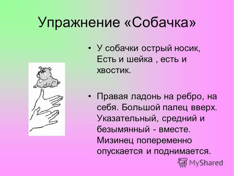 Упражнение «Собачка» У собачки острый носик, Есть и шейка, есть и хвостик. Правая ладонь на ребро, на себя. Большой палец вверх. Указательный, средний и безымянный - вместе. Мизинец попеременно опускается и поднимается.