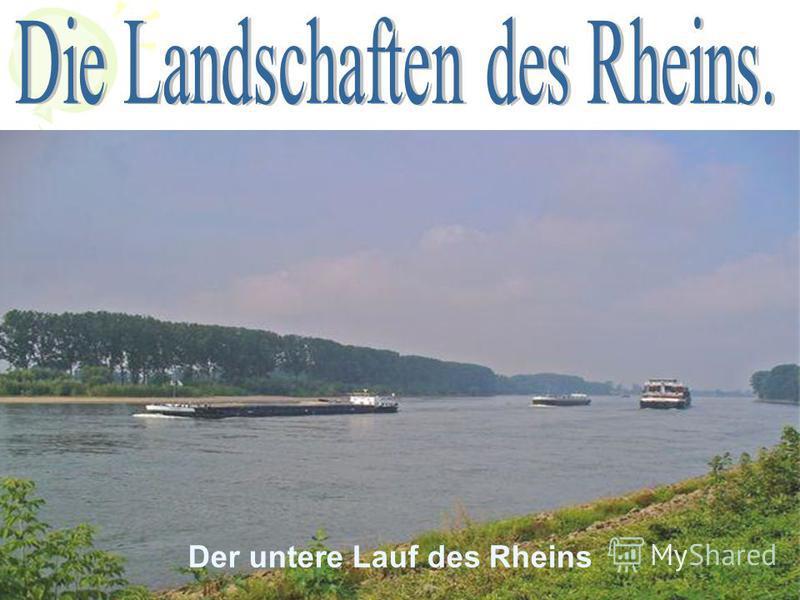Der untere Lauf des Rheins