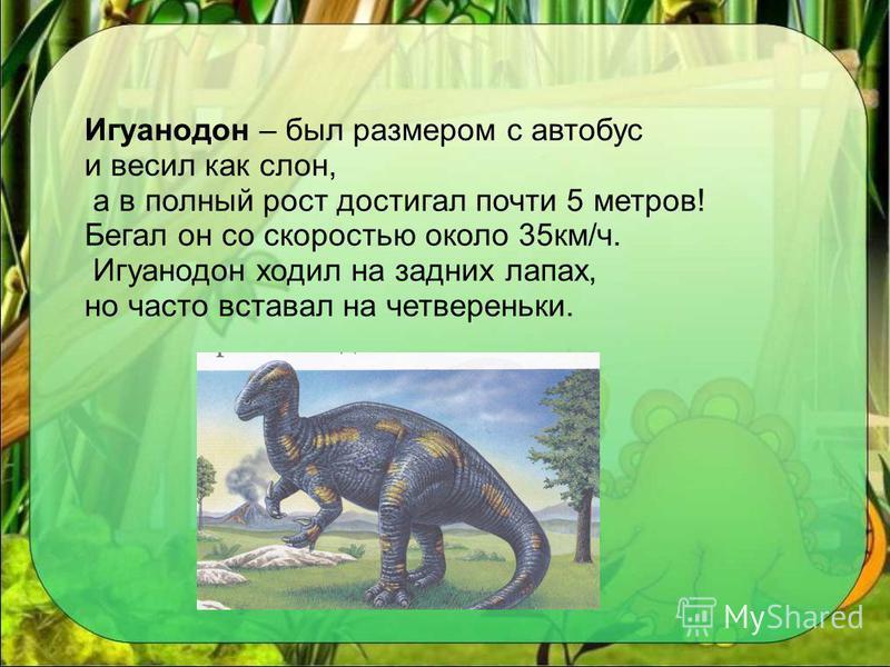 Игуанодон – был размером с автобус и весил как слон, а в полный рост достигал почти 5 метров! Бегал он со скоростью около 35 км/ч. Игуанодон ходил на задних лапах, но часто вставал на четвереньки.