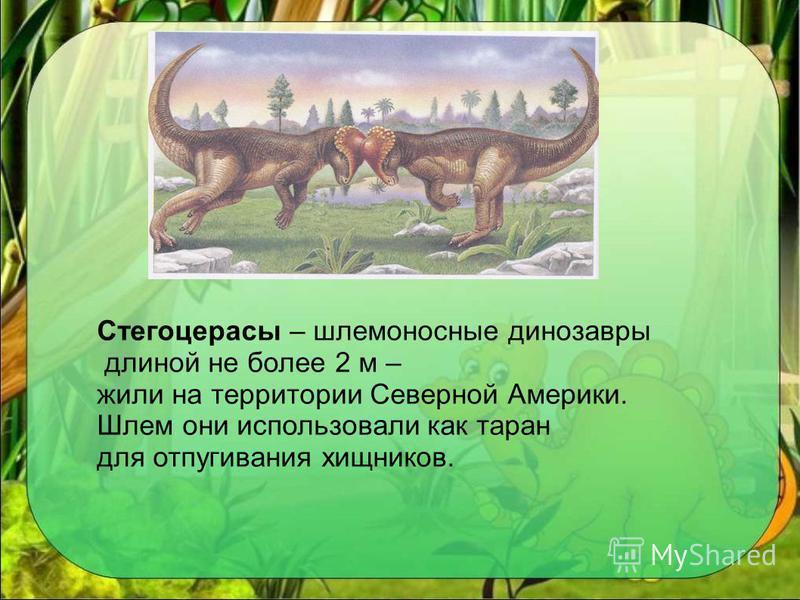 Стегоцерасы – шлемоносные динозавры длиной не более 2 м – жили на территории Северной Америки. Шлем они использовали как таран для отпугивания хищников.