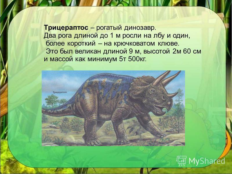 Трицераптос – рогатый динозавр. Два рога длиной до 1 м росли на лбу и один, более короткий – на крючковатом клюве. Это был великан длиной 9 м, высотой 2 м 60 см и массой как минимум 5 т 500 кг.