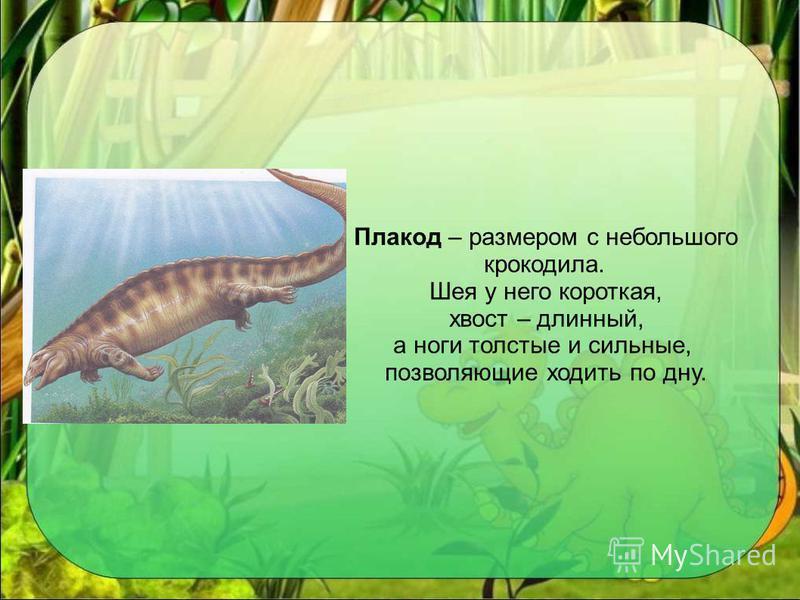 Плакод – размером с небольшого крокодила. Шея у него короткая, хвост – длинный, а ноги толстые и сильные, позволяющие ходить по дну.