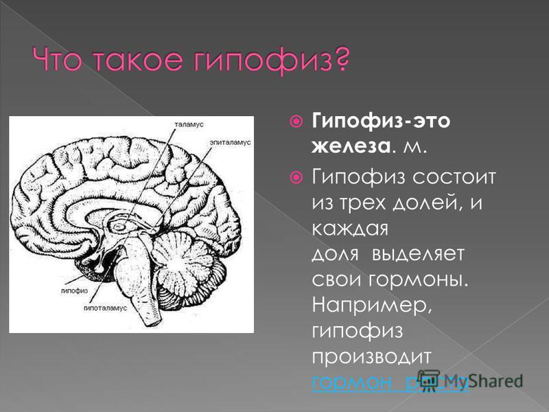 Гипофиз-это железа. м. Гипофиз состоит из трех долей, и каждая доля выделяет свои гормоны. Например, гипофиз производит гормон роста гормон роста