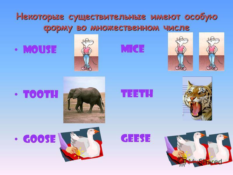 Некоторые существительные имеют особую форму во множественном числе Mouse Tooth Goose mice teeth geese