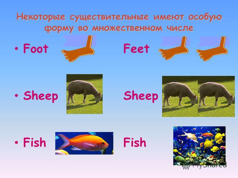 Некоторые существительные имеют особую форму во множественном числе Foot Sheep Fish Feet Sheep Fish
