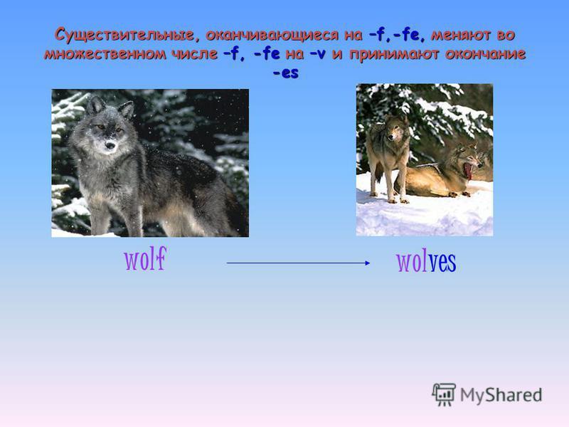 Существительные, оканчивающиеся на –f,-fe, меняют во множественном числе –f, -fe на –v и принимают окончание -es wolf wolves