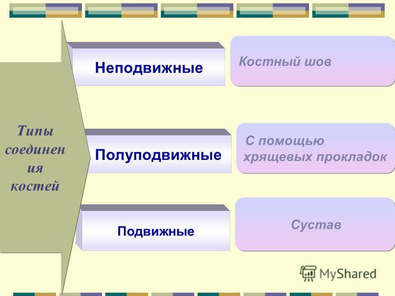 Полуподвижные С помощью хрящевых прокладок Неподвижные Костный шов Подвижные Сустав Типы соединен ия костей