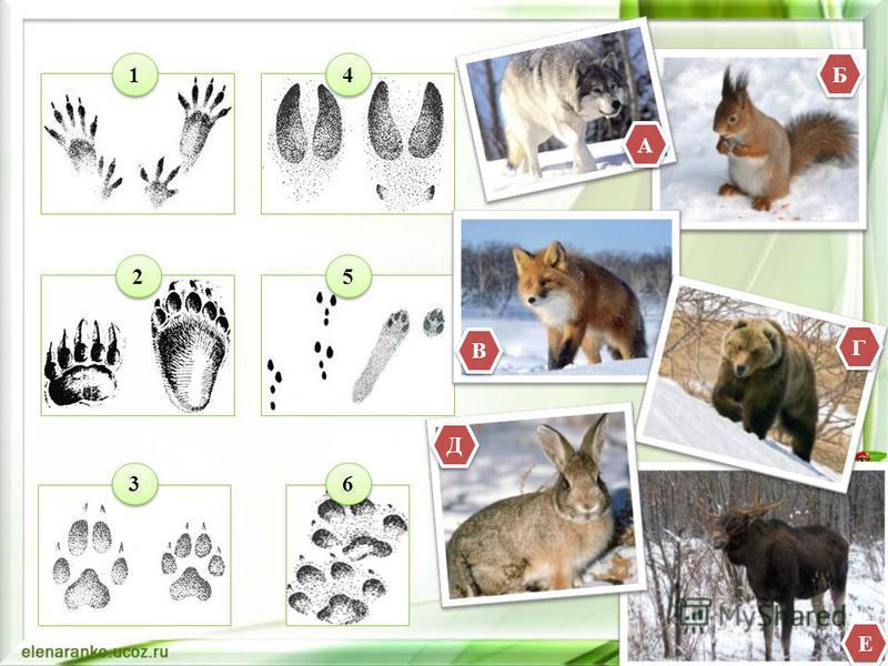 Соотнесите след животного с его изображением. Время выполнения задания – 3 минуты. Каждый правильный ответ этого конкурса оценивается в 2 балла.