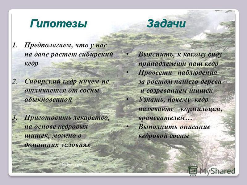 1.Предполагаем, что у нас на даче растет сибирский кедр 2. Сибирский кедр ничем не отличается от сосны обыкновенной 3. Приготовить лекарство, на основе кедровых шишек, можно в домашних условиях Выяснить, к какому виду принадлежит наш кедр Провести на