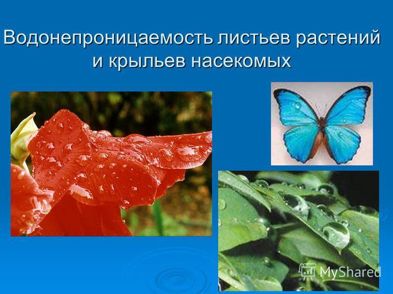 Водонепроницаемость листьев растений и крыльев насекомых