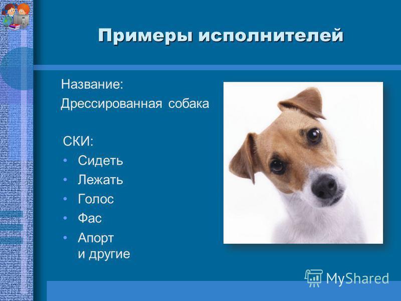 Примеры исполнителей Название: Дрессированная собака СКИ: Сидеть Лежать Голос Фас Апорт и другие