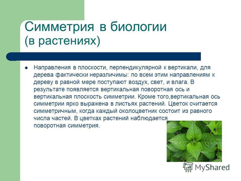 Симметрия в биологии (в растениях) Направления в плоскости, перпендикулярной к вертикали, для дерева фактически неразличимы: по всем этим направлениям к дереву в равной мере поступают воздух, свет, и влага. В результате появляется вертикальная поворо