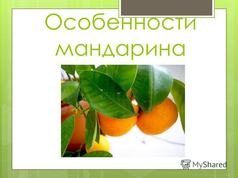 Особенности мандарина