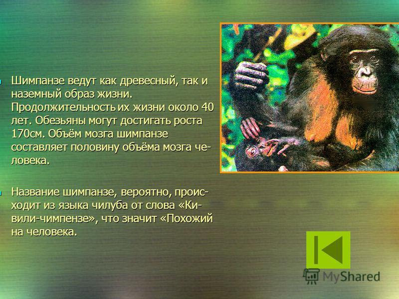 Горилла Орангутанг Орангутанг и горилла- близкие родственники шимпанзе. Орангутанг и горилла- близкие родственники шимпанзе. Шимпанзе Ну наиболее близкий её родич- ЧЕЛОВЕК