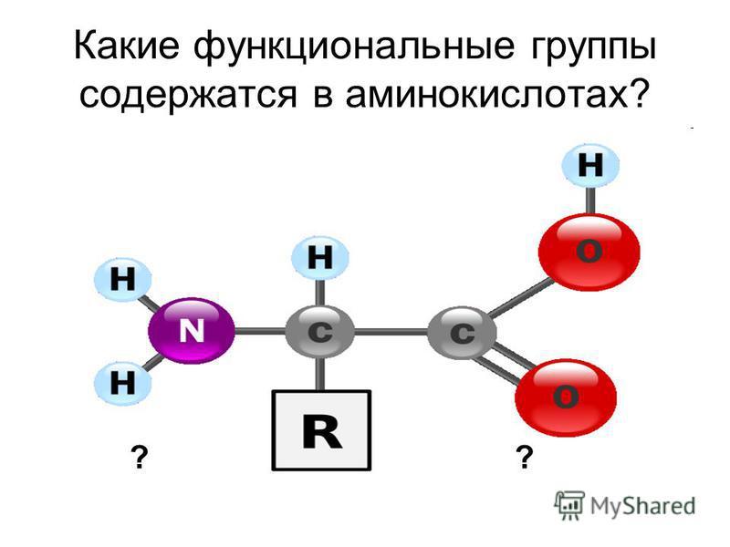 Какие функциональные группы содержатся в аминокислотах? ??