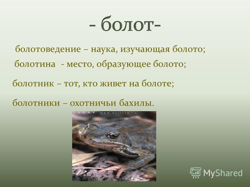 болотоведение – наука, изучающая болото; болотина - место, образующее болото; болотник – тот, кто живет на болоте; болотники – охотничьи бахилы.