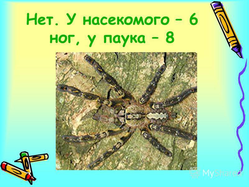 Нет. У насекомого – 6 ног, у паука – 8