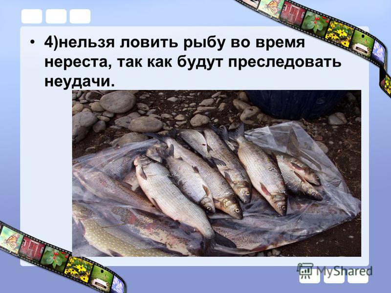 4)нельзя ловить рыбу во время нереста, так как будут преследовать неудачи.