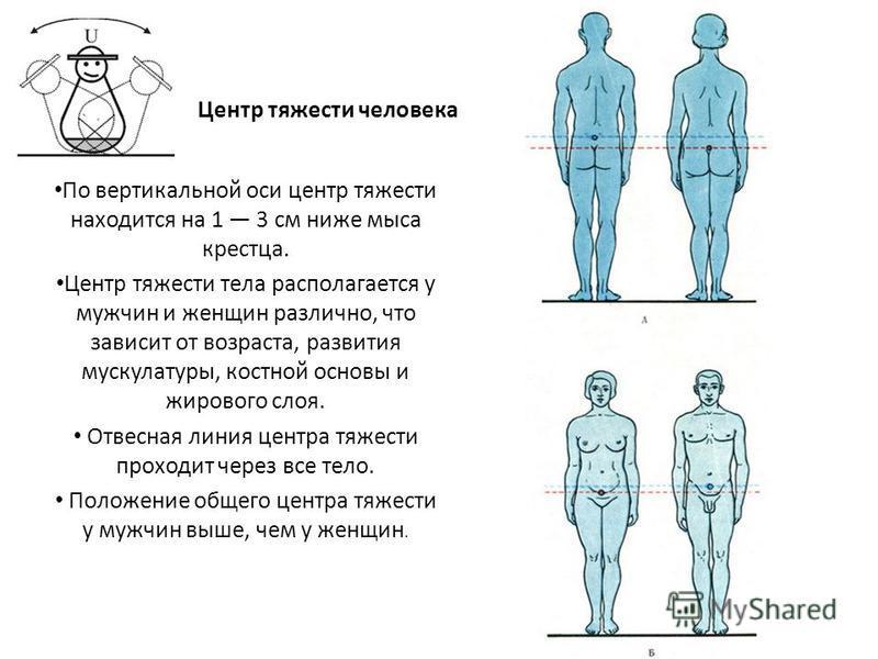 Центр тяжести человека По вертикальной оси центр тяжести находится на 1 3 см ниже мыса крестца. Центр тяжести тела располагается у мужчин и женщин различно, что зависит от возраста, развития мускулатуры, костной основы и жирового слоя. Отвесная линия