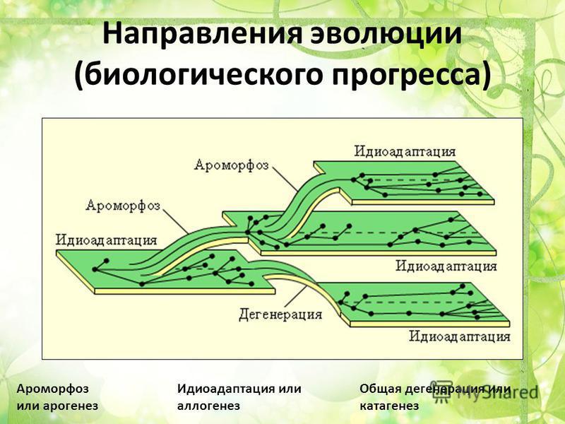 Направления эволюции (биологического прогресса) Ароморфоз или арогенез Идиоадаптация или аллогенез Общая дегенерация или катагенез