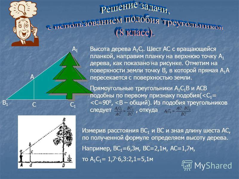А1А1 А С1С1 С В1В1 Высота дерева А 1 С !. Шест АС с вращающейся планкой, направим планку на верхнюю точку А 1 дерева, как показано на рисунке. Отметим на поверхности земли точку В, в которой прямая А 1 А пересекается с поверхностью земли. Прямоугольн