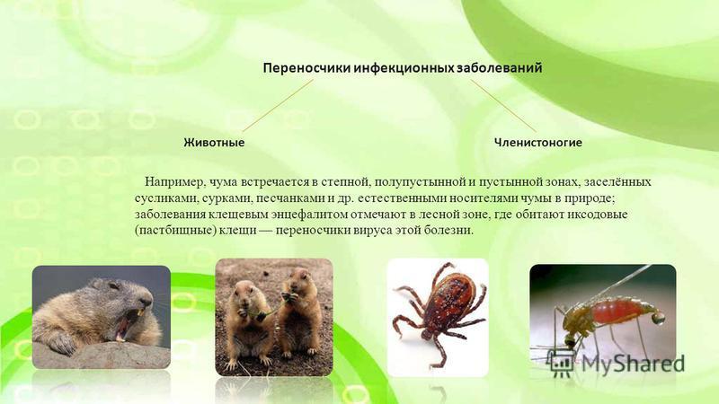Переносчики инфекционных заболеваний Животные Членистоногие Например, чума встречается в степной, полупустынной и пустынной зонах, заселённых сусликами, сурками, песчанками и др. естественными носителями чумы в природе; заболевания клещевым энцефалит
