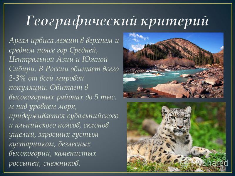 Ареал ирбиса лежит в верхнем и среднем поясе гор Средней, Центральной Азии и Южной Сибири. В России обитает всего 2-3% от всей мировой популяции. Обитает в высокогорных районах до 5 тыс. м над уровнем моря, придерживается субальпийского и альпийского