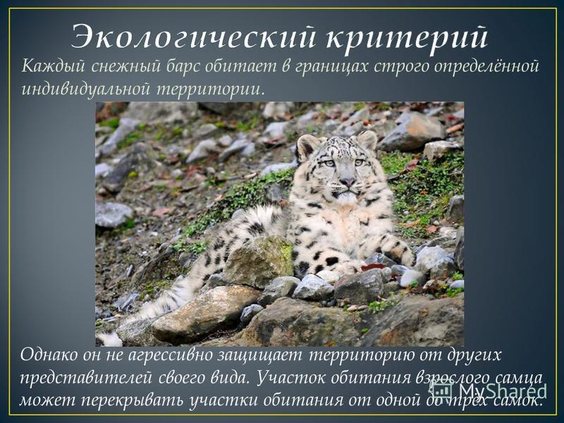 Каждый снежный барс обитает в границах строго определённой индивидуальной территории. Однако он не агрессивно защищает территорию от других представителей своего вида. Участок обитания взрослого самца может перекрывать участки обитания от одной до тр
