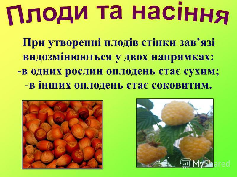 При утворенні плодів стінки завязі видозмінюються у двох напрямках: -в одних рослин оплодень стає сухим; -в інших оплодень стає соковитим.